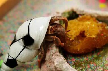 how to take care of a hermit crab