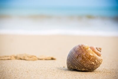 Where-Do-Hermit-Crabs-Get-Their-Shells?
