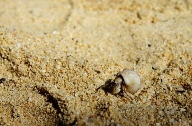 best kind of sand for hermit crabs