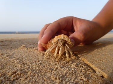 can hermit crabs trust you?
