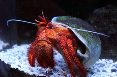 can you travel with hermit crabs?