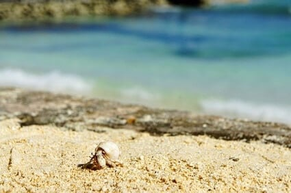 can you use regular sand for hermit crabs?