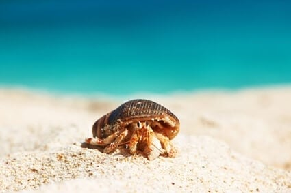 cool hermit crab facts