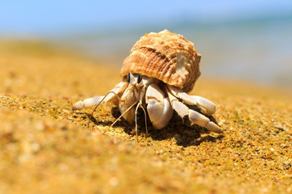 do hermit crabs like hot or cold?