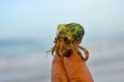 fun hermit crab facts