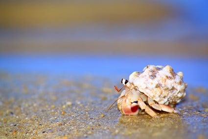 hermit crab intelligence