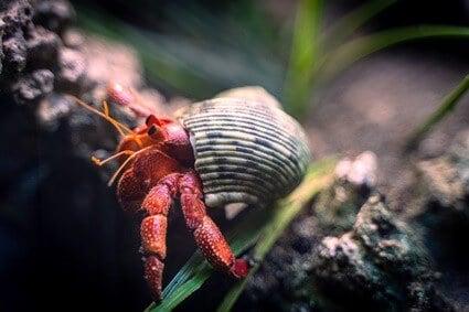 hermit crab post purchase stress