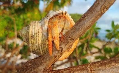 hermit crab social behaviors