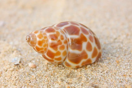 how do hermit crabs choose their shells?