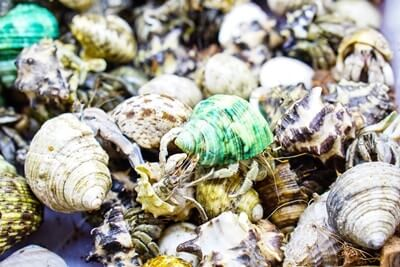 how much do hermit crabs cost?