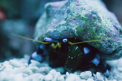 how often do you need to clean a hermit crab tank?