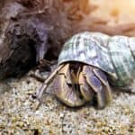 how to clean a hermit crab tank