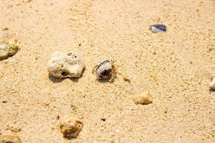 how to make hermit crab substrate