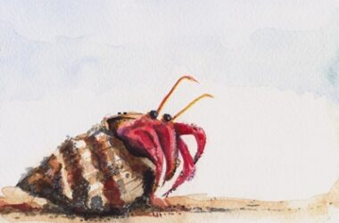 how to tell if a hermit crab is stuck in its shell