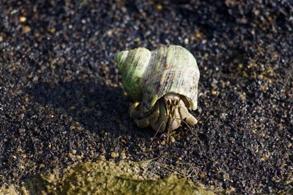 is my hermit crab dead or sleeping?