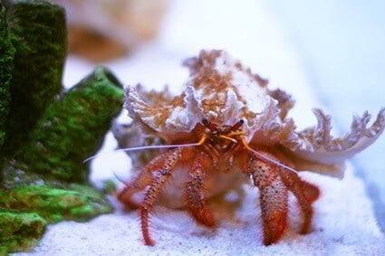 what do you use to clean a hermit crab tank?