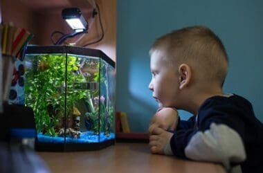 what lights do hermit crabs need?