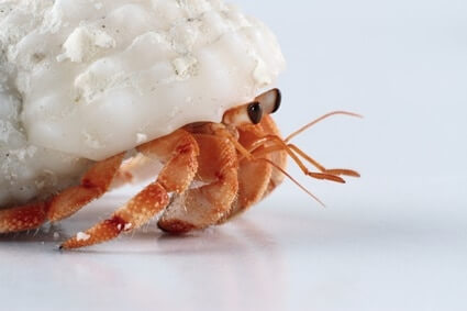 what temperature should hermit crabs be kept at?