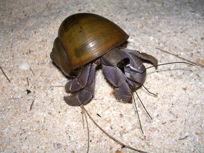 will a hermit crab die if you drop it?