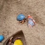 are you supposed to play with hermit crabs?