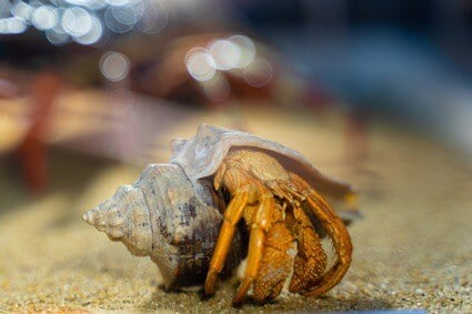 do hermit crabs like noise?
