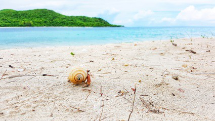 how do hermit crabs get their first shell?