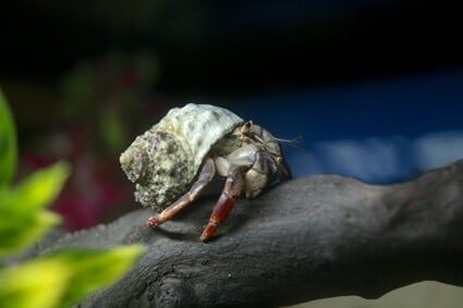 how much does hermit crab food cost?
