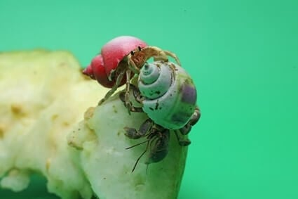 how much does it cost to care for a hermit crab?