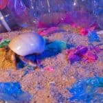 can hermit crabs see color?