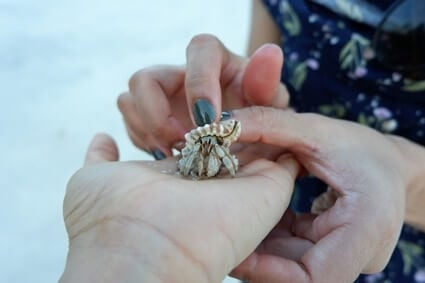hermit crabs about us page