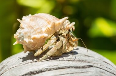 how to tame a hermit crab