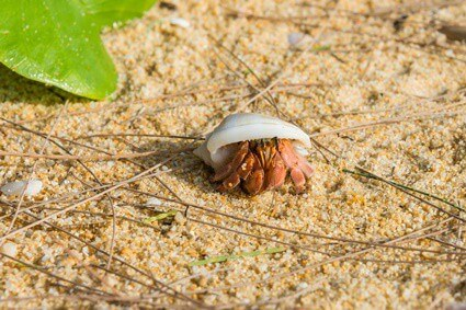 how to tell if your hermit crab likes you
