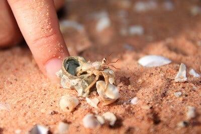 why is my hermit crab afraid of me?