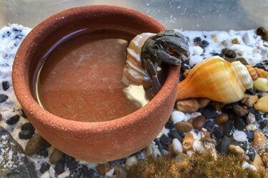 can my hermit crab drown?